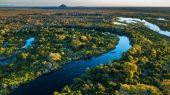Coalición multimillonaria busca proteger los bosques tropicales del mundo