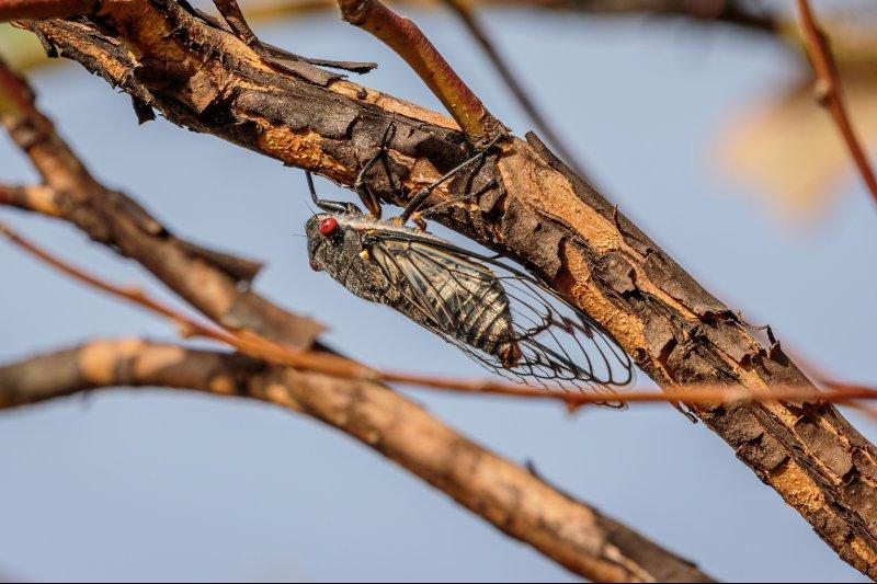 ¿Cómo impacta el cambio climático en los insectos?