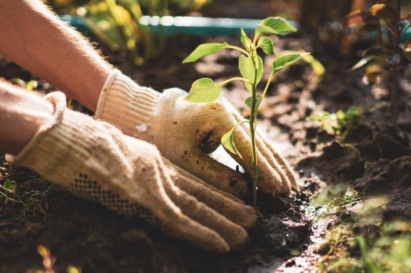 Día mundial del medio ambiente: año de la restauración
