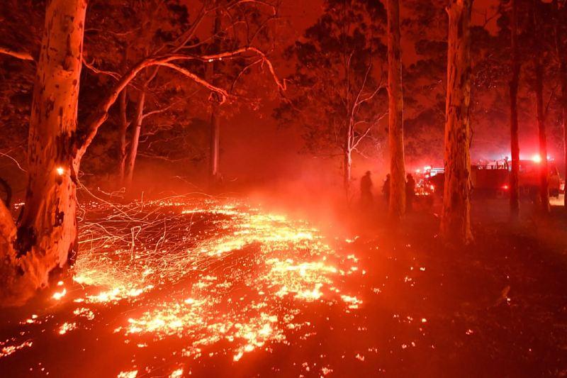Incendios forestales y el cambio climático pintan un futuro aterrador