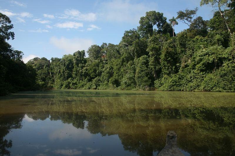 Perú: nuevo acuerdo de conservación en el parque nacional El Manu