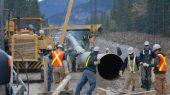 Suspenden oleoducto en Canadá por temporada de anidación