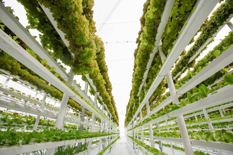 5 métodos de agricultura sostenible