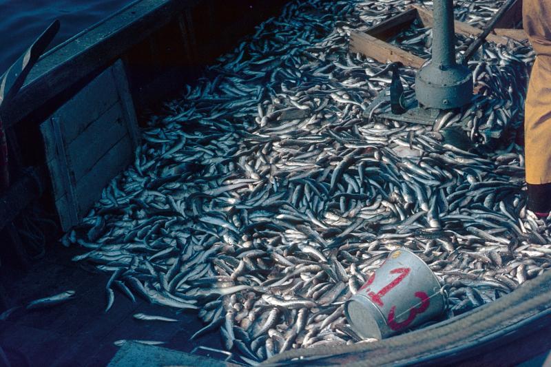 6 consejos para consumir mariscos de una forma más sustentable