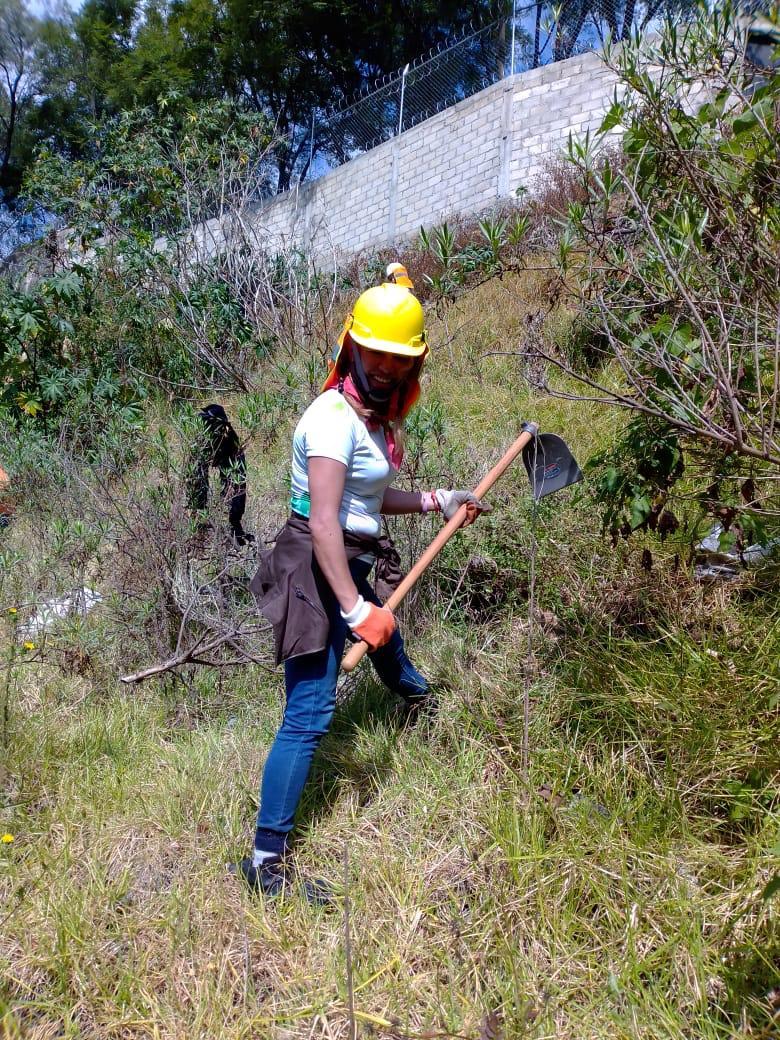 Proyecto de reforestación - Foto Ectagono