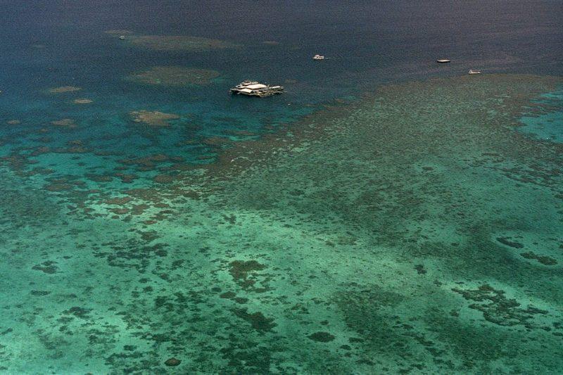 ¿Dejarán de existir los arrecifes de coral pronto?
