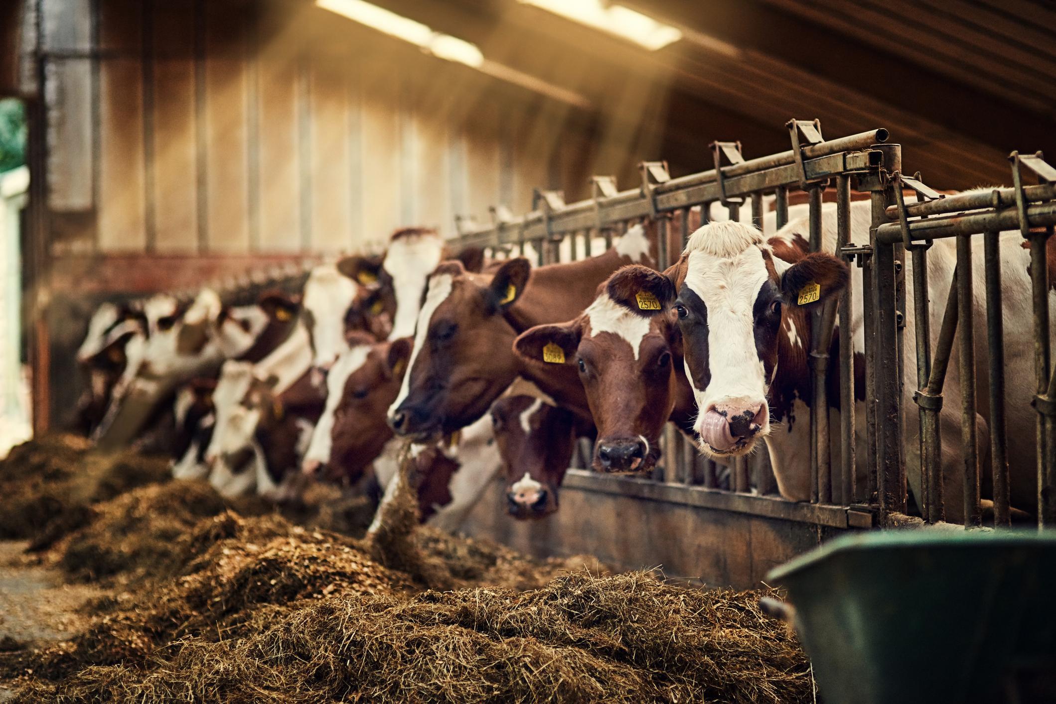 Impactos ambientales de la ganadería - Foto por Peopleimages