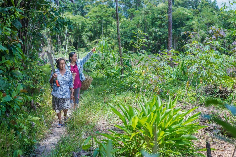 Liz ayudó a rescatar el parque nacional de la deforestación - Foto por Golden Environmental Prize