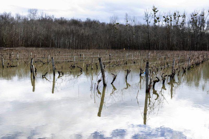 Producción de vino se ve afectada por el clima extremo en Francia