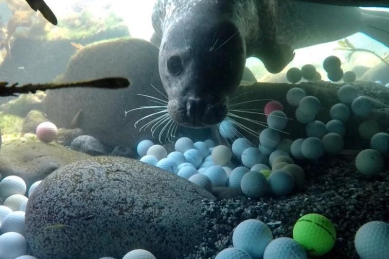 El golf está contaminando los océanos