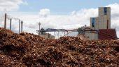 Por qué obtener energía renovable de la quema de árboles es perjudicial