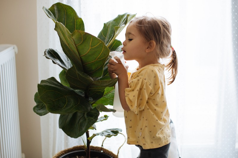Las plantas de tu hogar también se encuentran en peligro por el clima extremo que cada vez es más frecuente