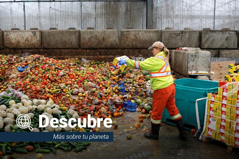 Descubre el impacto del desperdicio de comida en el ambiente