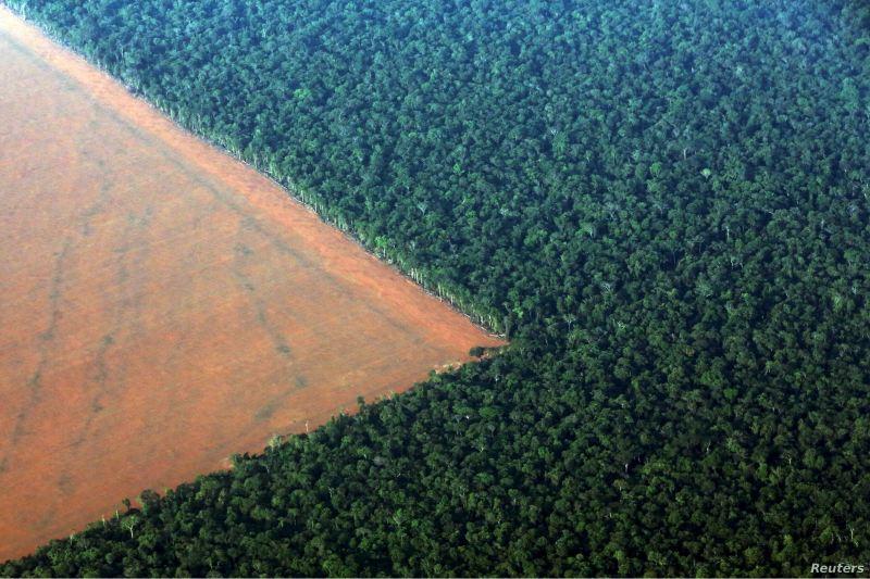 La selva amazónica está absorbiendo más CO2 del que absorbe.
