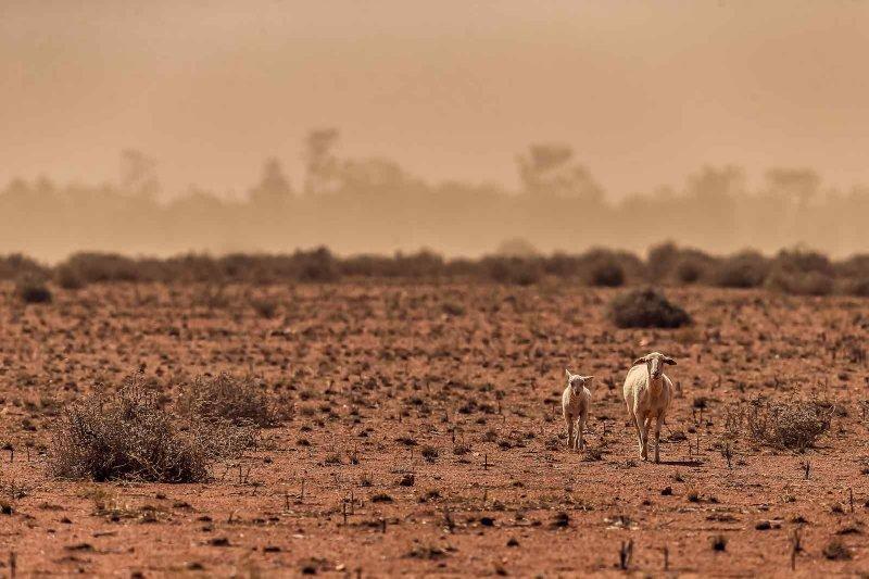 Australia sancionada por no cumplir sus objetivos climáticos