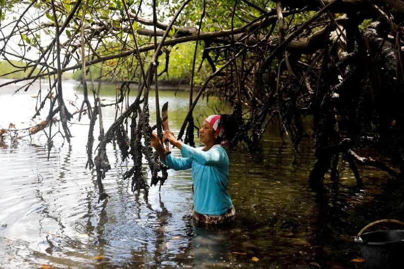 Una gestión sostenible de los manglares ayuda a las comunidades en desarrollo