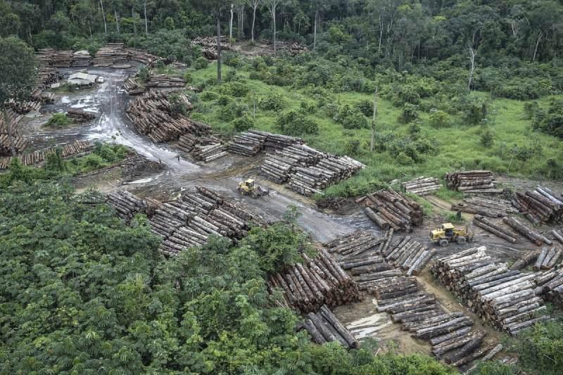 Amazon se compromete a proteger la Amazonía