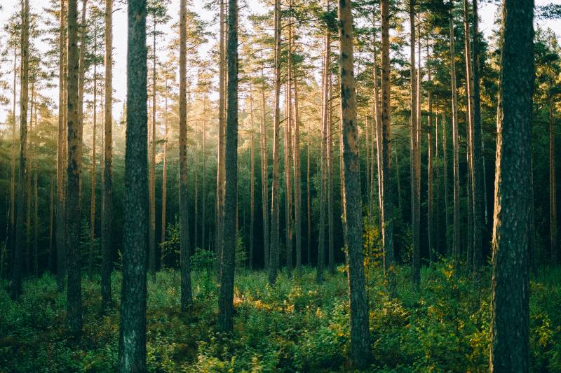 Casi la mitad de las especies de los árboles de todo el mundo se encuentran en peligro de extinción.