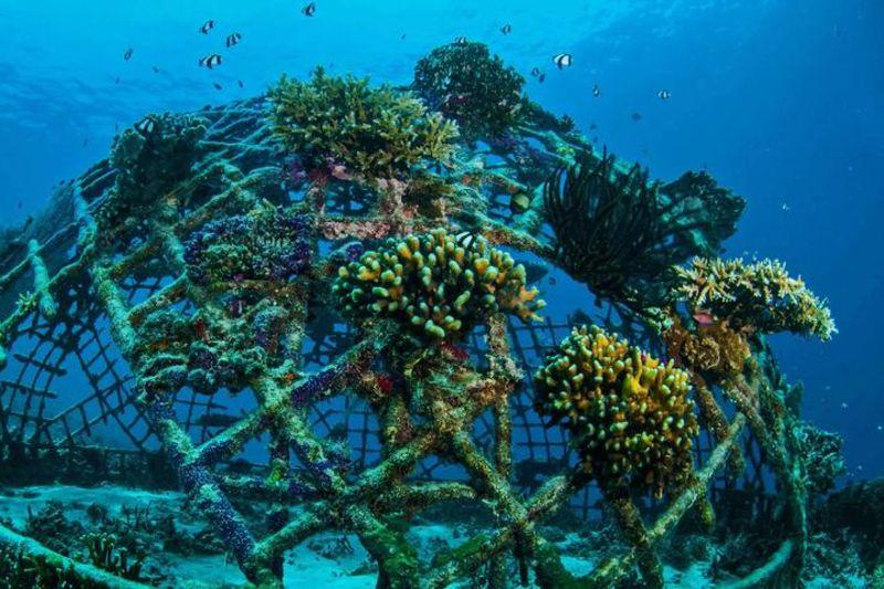 Arrecifes de coral parcialmente artificiales para protección marítima.
