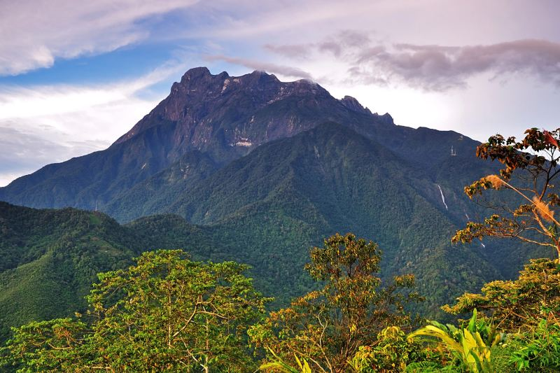 Los bosques de montaña han demostrado que capturan grandes cantidades de carbono.