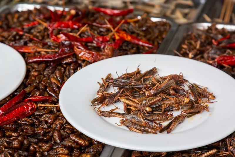 Comer insectos puede ser una solución al hambre mundial y sobrepoblación.