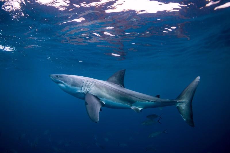 Estas son las especies con mayor riesgo de extinción.