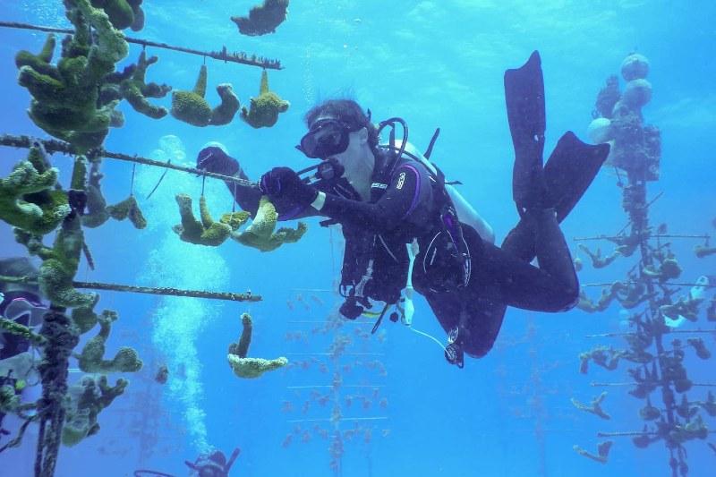 Bióloga marina descubrió como salvar a los corales con esponjas de mar.