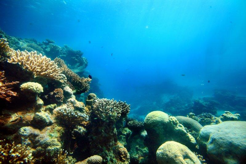 Lugares donde los arrecifes de coral son más vulnerables.