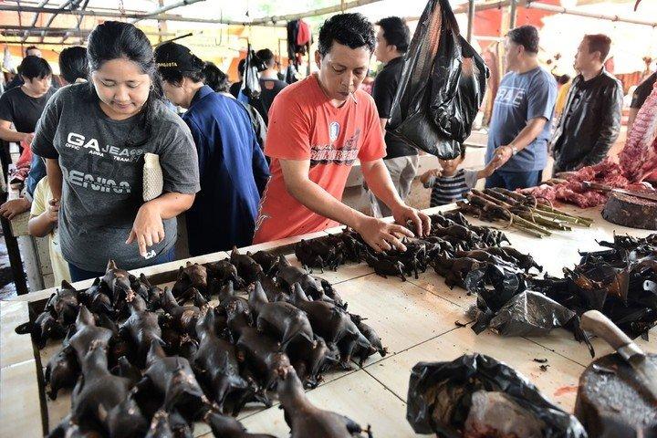 La destrucción de la naturaleza y hábitats provoca enfermedades zoonóticas - Foto AFP